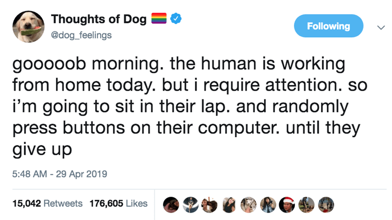 Text - Thoughts of Dog Following @dog_feelings gooooob morning. the human is working from home today. but i require attention. so i'm going to sit in their lap. and randomly press buttons on their computer. until they give up 5:48 AM 29 Apr 2019 15,042 Retweets 176,605 Likes
