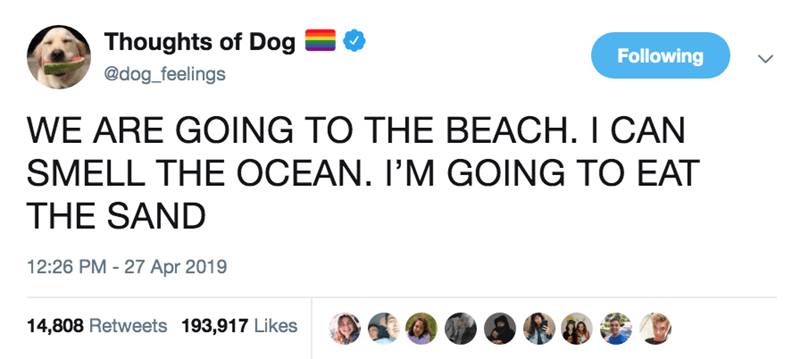 Text - Thoughts of Dog Following @dog_feelings WE ARE GOING TO THE BEACH. I CAN SMELL THE OCEAN. I'M GOING TO EAT THE SAND 12:26 PM 27 Apr 2019 14,808 Retweets 193,917 Likes