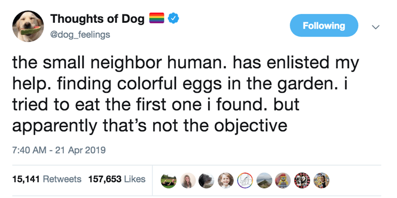 Text - Thoughts of Dog Following @dog_feelings the small neighbor human. has enlisted my help. finding colorful eggs in the garden. i tried to eat the first one i found. but apparently that's not the objective 7:40 AM - 21 Apr 2019 15,141 Retweets 157,653 Likes DI
