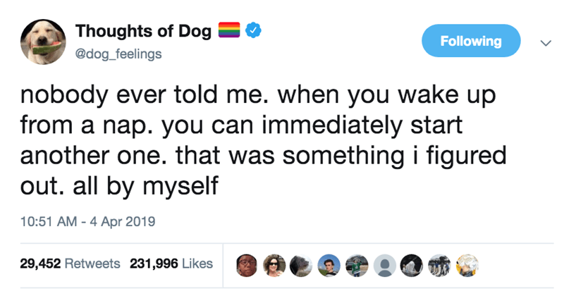 Text - Thoughts of Dog Following @dog_feelings nobody ever told me. when you wake up from a nap. you can immediately start another one. that was something i figured out. all by myself 10:51 AM - 4 Apr 2019 29,452 Retweets 231,996 Likes