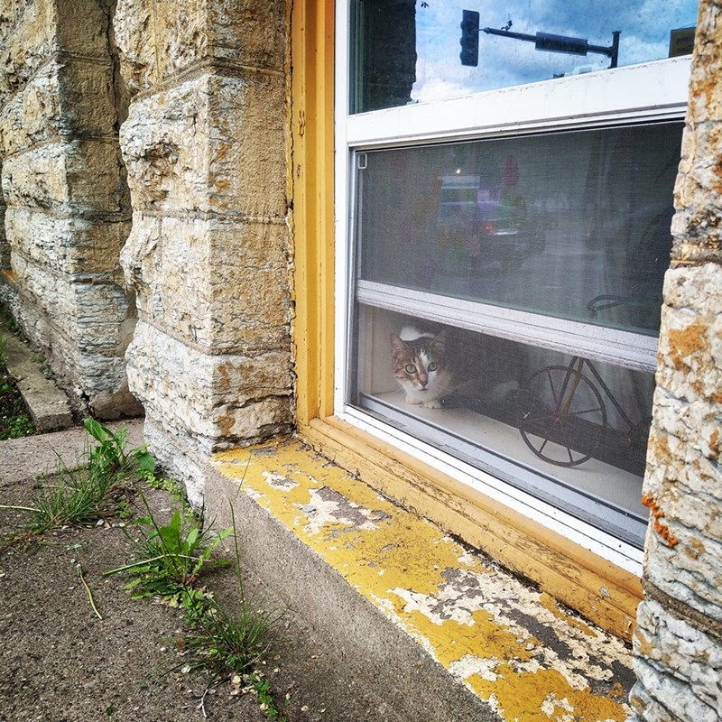 Cats of the Wedge Tour - Wall
