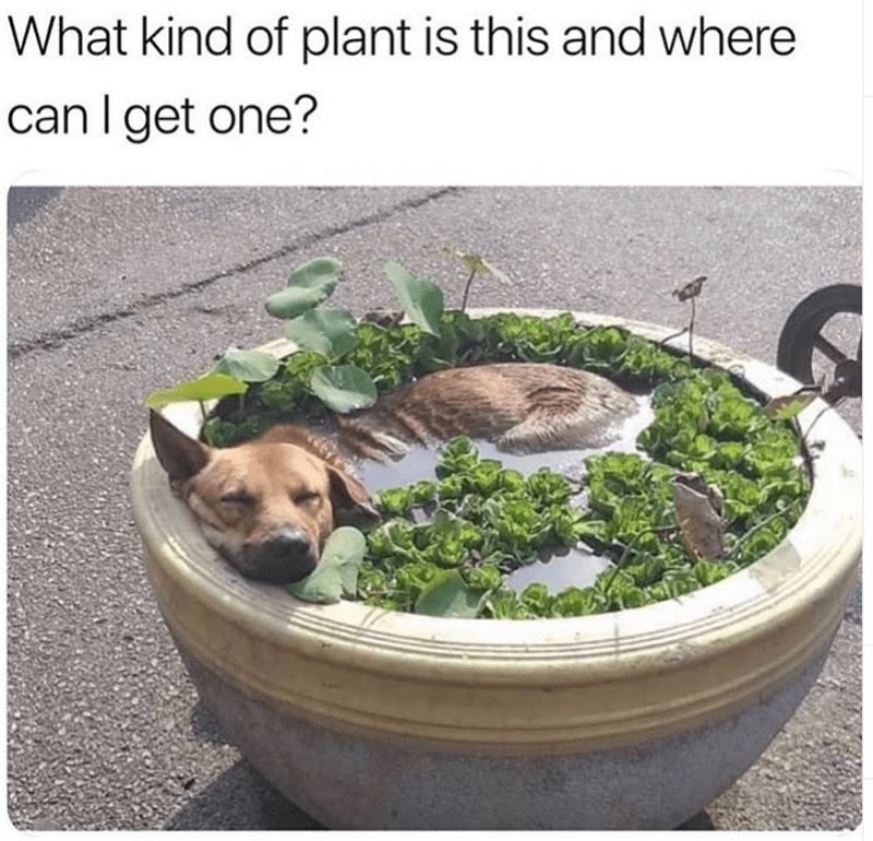 dog memes - Canidae - What kind of plant is this and where can I get one?