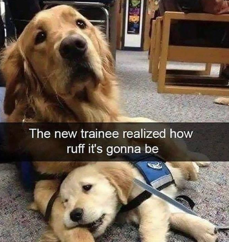 dog memes - Dog - The new trainee realized how ruff it's gonna be