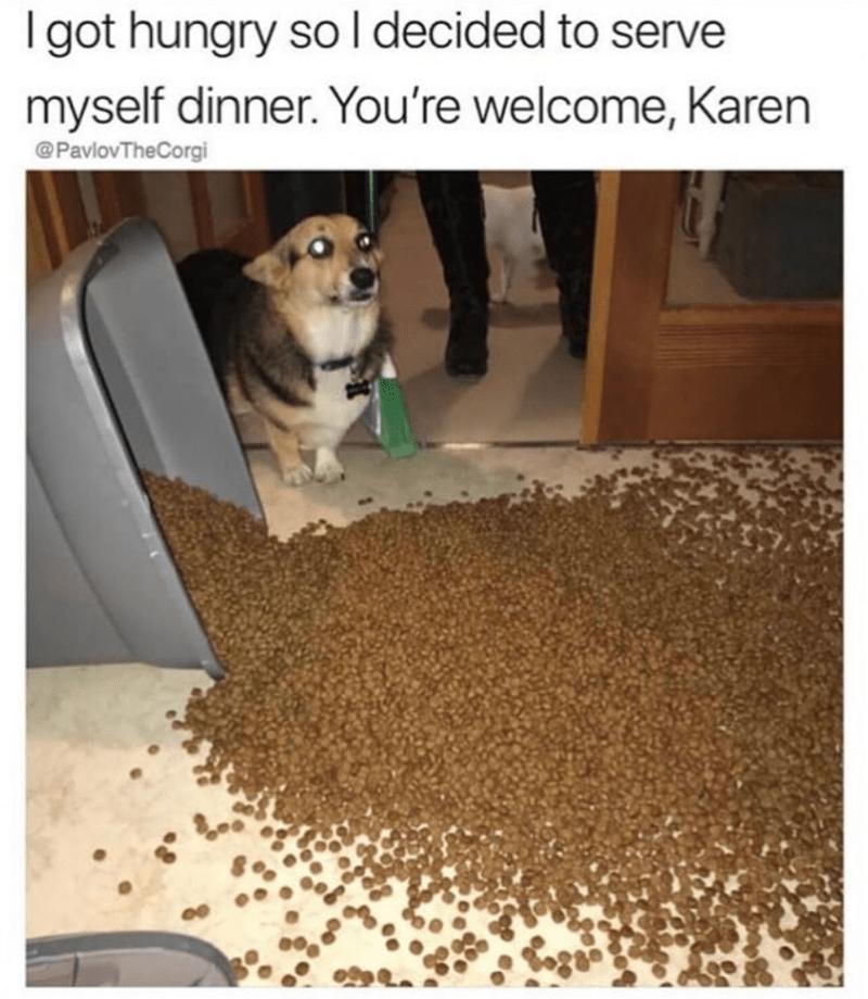dog memes - Pet food - Igot hungry so l decided to serve myself dinner. You're welcome, Karen @PavlovTheCorgi
