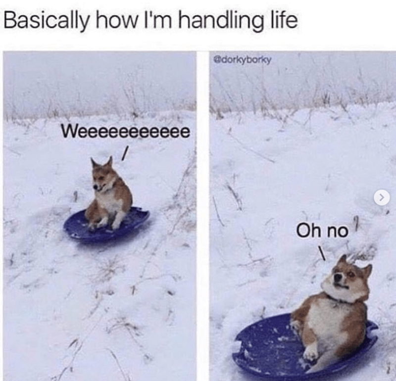 dog memes - Cat - Basically how I'm handling life edorkyborky Weeeeeeeeeee / Oh no