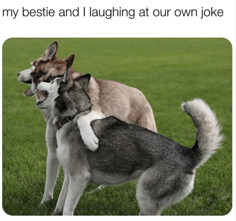 dog memes - Dog - my bestie and I laughing at our own joke