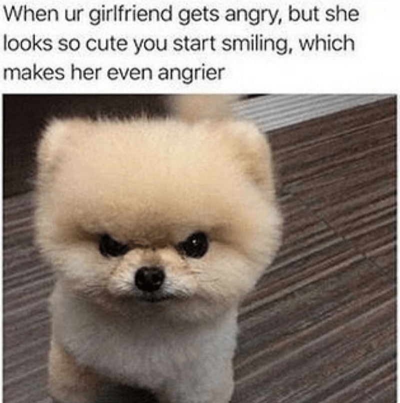 dog memes - Mammal - When ur girlfriend gets angry, but she looks so cute you start smiling, which makes her even angrier