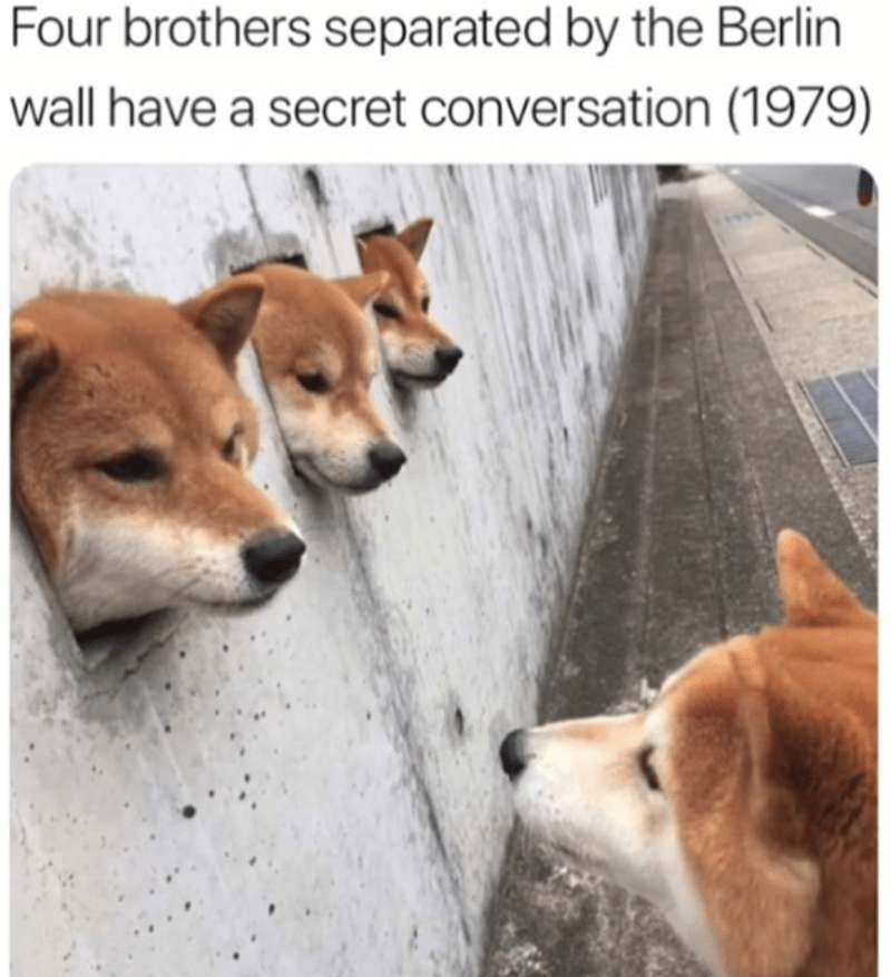 dog memes - Dog - Four brothers separated by the Berlin wall have a secret conversation (1979)