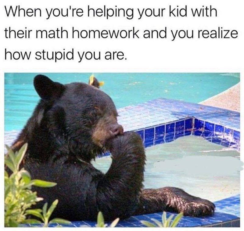 Bear - When you're helping your kid with their math homework and you realize how stupid you are.