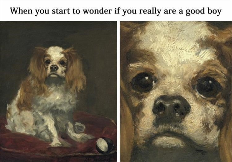 dog memes - Dog - When you start to wonder if you really are a good boy