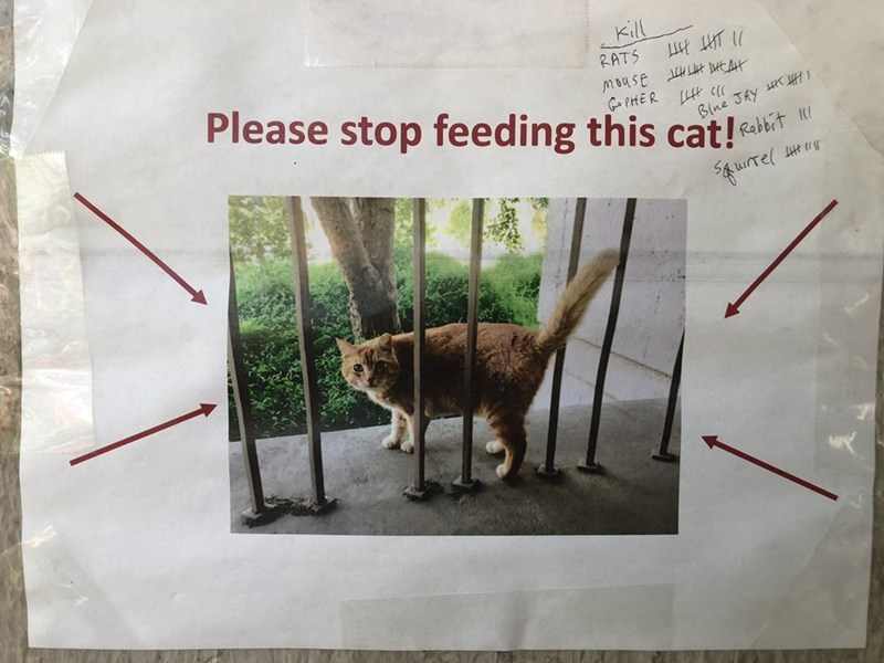 Text - Kill T moasE EAH GPHER Please stop feeding this cat! RATS Blne Jhy ff