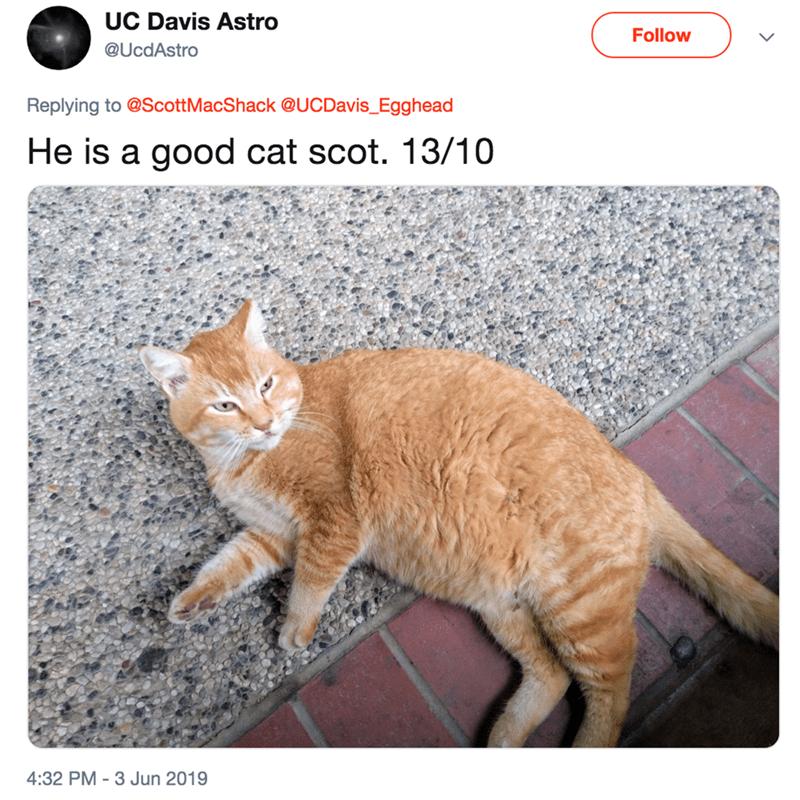 Cat - UC Davis Astro Follow @UcdAstro Replying to @ScottMacShack @UCDavis_Egghead He is a good cat scot. 13/10 4:32 PM -3 Jun 2019