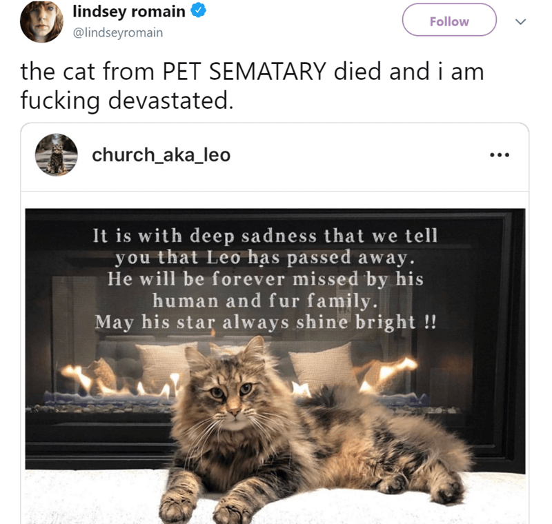 Cat - lindsey romain Follow @lindseyromain the cat from PET SEMATARY died and i am fucking devastated. church_aka_leo It is with deep sadness that we tell you that Leo has passed away. He will be forever missed by his human and fur family. May his star always shine bright !!