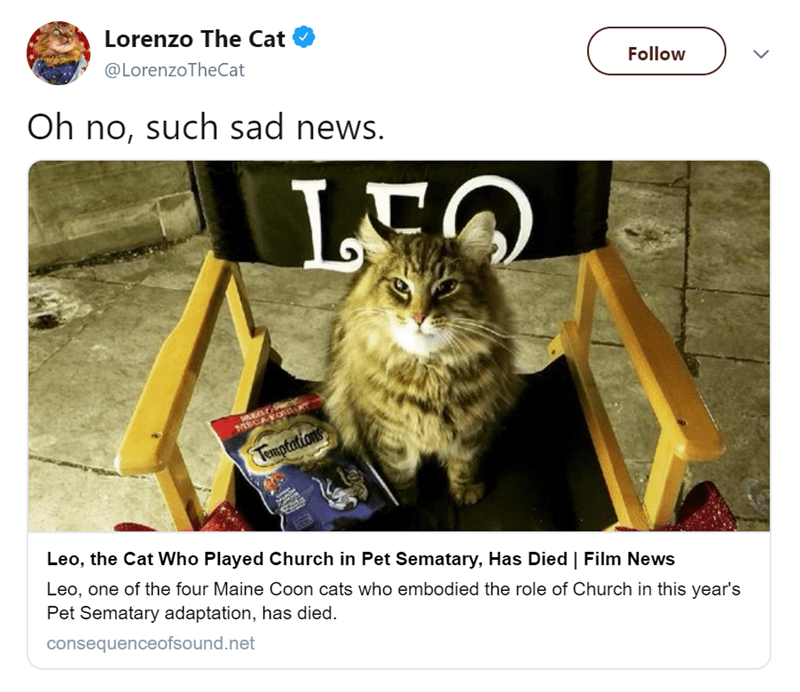 Cat - Lorenzo The Cat @LorenzoTheCat Follow Oh no, such sad news. LEC MECAYOU Temptations Leo, the Cat Who Played Church in Pet Sematary, Has Died | Film News Leo, one of the four Maine Coon cats who embodied the role of Church in this year's Pet Sematary adaptation, has died. consequenceofsound.net