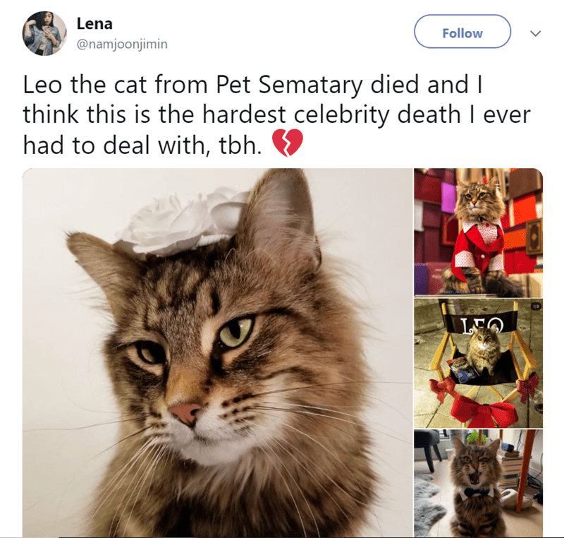 Cat - Lena Follow @namjoonjimin Leo the cat from Pet Sematary died and I think this is the hardest celebrity death I ever had to deal with, tbh. 1/3 LQ
