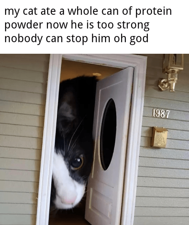 pic of a cat looking through the door of a miniature house and caption saying it got too big from eating protein powder
