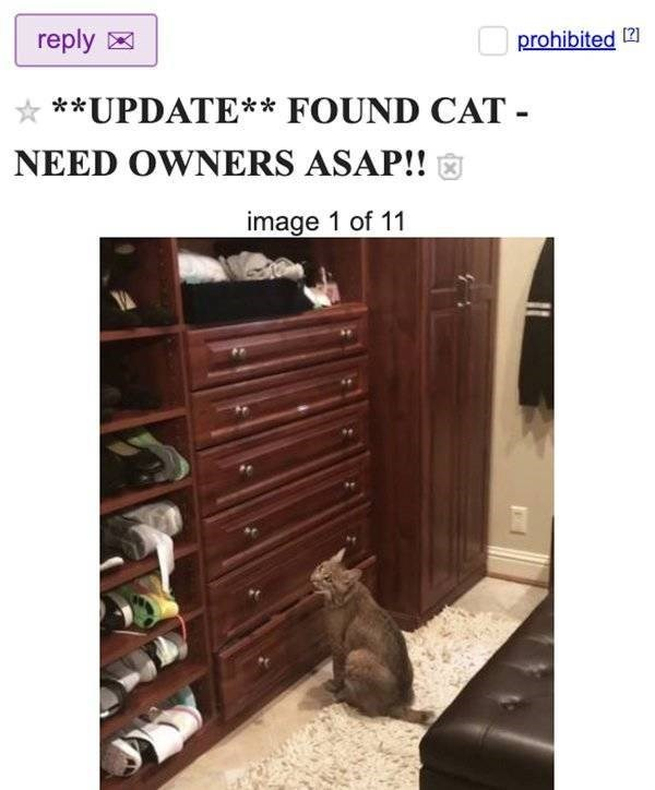 Product - reply prohibited 2 **UPDATE** FOUND CAT NEED OWNERS ASAP!! image 1 of 11