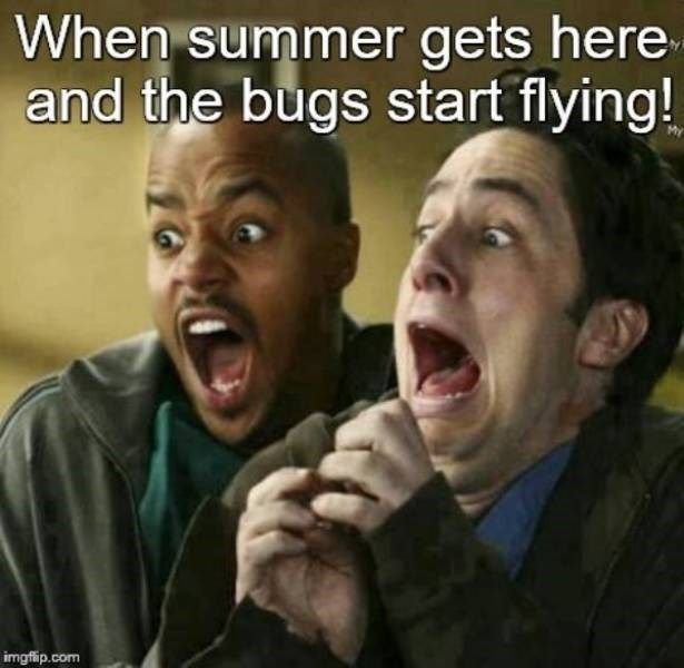 Facial expression - When summer gets here and the bugs start flying! imgflip.com