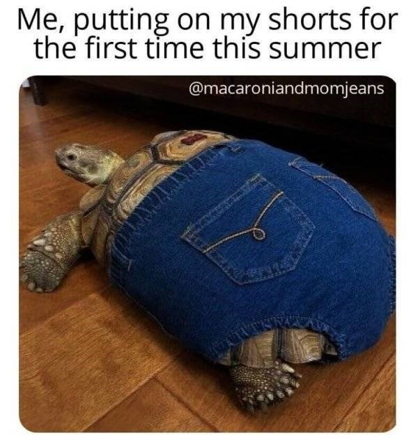Tortoise - Me, putting on my shorts for the first time this summer @macaroniandmomjeans