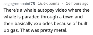 Text - sagegreenpaint78 16.6k points 16 hours ago There's a whale autopsy video where the whale is paraded through a town and then basically explodes because of built up gas. That was pretty metal