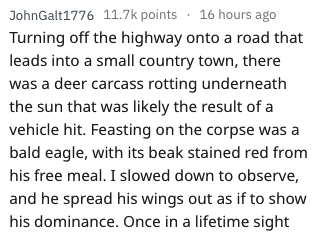 Text - JohnGalt1776 11.7k points 16 hours ago Turning off the highway onto a road that leads into a small country town, there was a deer carcass rotting underneath the sun that was likely the result of a vehicle hit. Feasting on the corpse was a bald eagle, with its beak stained red from his free meal. I slowed down to observe, and he spread his wings out as if to show his dominance. Once in a lifetime sight