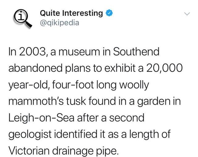 Text - Quite Interesting @qikipedia In 2003, a museum in Southend abandoned plans to exhibit a 20,000 year-old, four-foot long woolly mammoth's tusk found in a garden in Leigh-on-Sea after a second geologist identified it as a length of Victorian drainage pipe.
