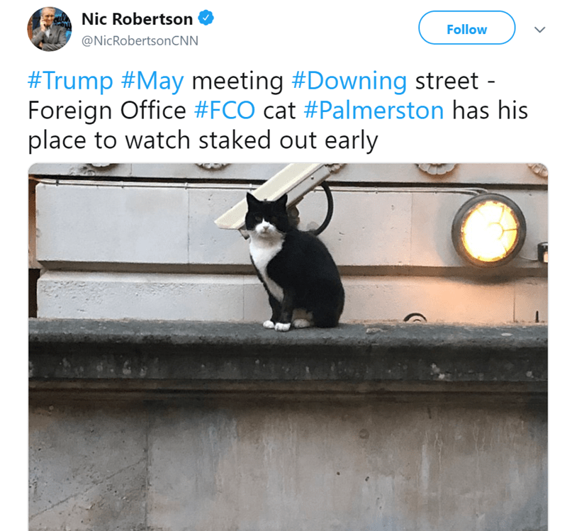 Text - Nic Robertson Follow @NicRobertsonCNN #Trump #May meeting #Downing street - Foreign Office #FCO cat #Palmerston has his place to watch staked out early