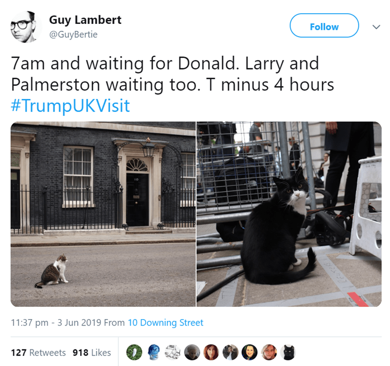 Product - Guy Lambert @GuyBertie Follow 7am and waiting for Donald. Larry and Palmerston waiting too. T minus 4 hours #TrumpUKVisit 11:37 pm 3 Jun 2019 From 10 Downing Street 127 Retweets 918 Likes