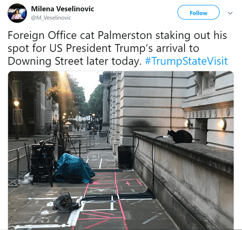 Architecture - Milena Veselinovic Follow @M_Veselinovic Foreign Office cat Palmerston staking out his spot for US President Trump's arrival to Downing Street later today. #TrumpStateVisit