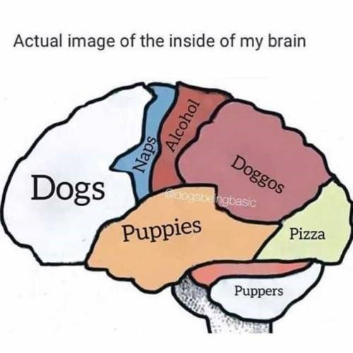 illustration of a human brain that is very focused on dogs