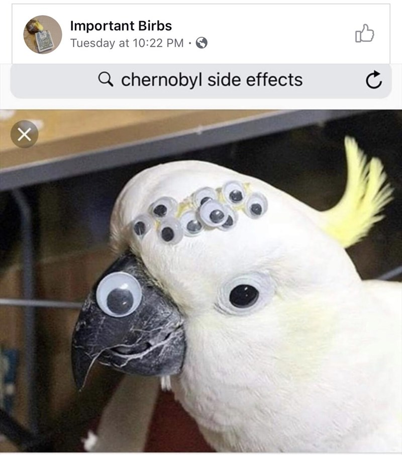 Chernobyl meme of bird with many eyes joked as a side effect from the radiation