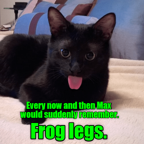 frog cat memes - 9315090944