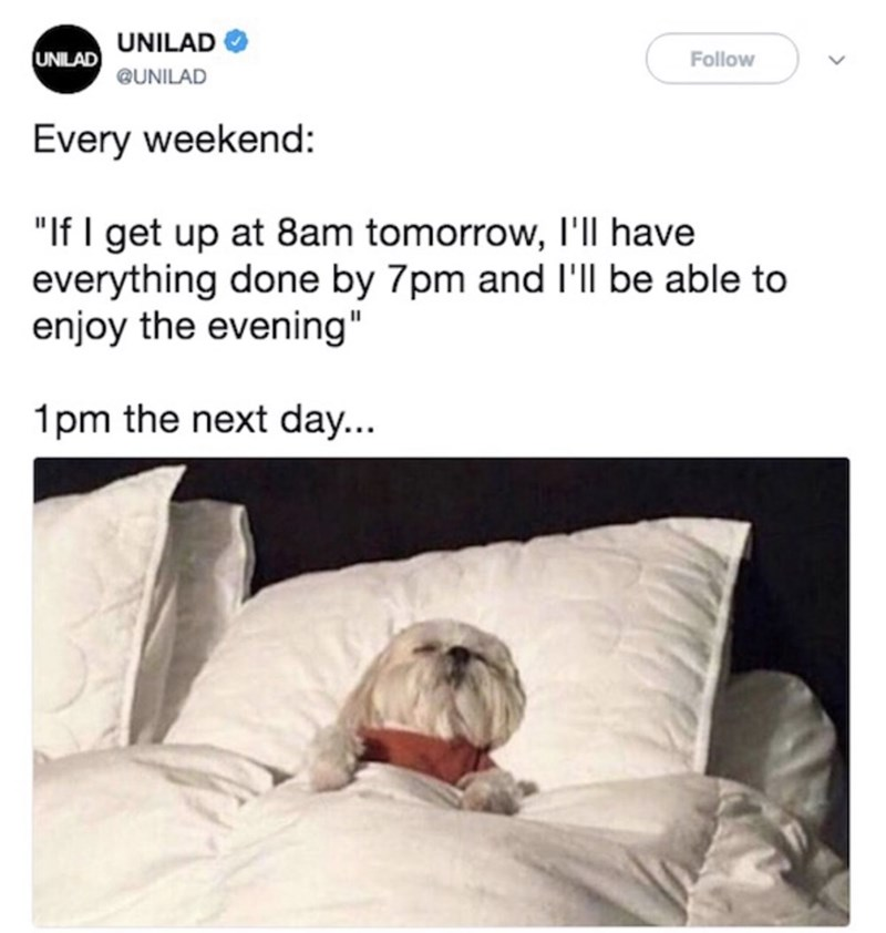 "funny meme - Text - UNILAD UNILAD Follow @UNILAD Every weekend: ""If I get up at 8am tomorrow, I'll have everything done by 7pm and I'll be able to enjoy the evening"" 1pm the next day..."