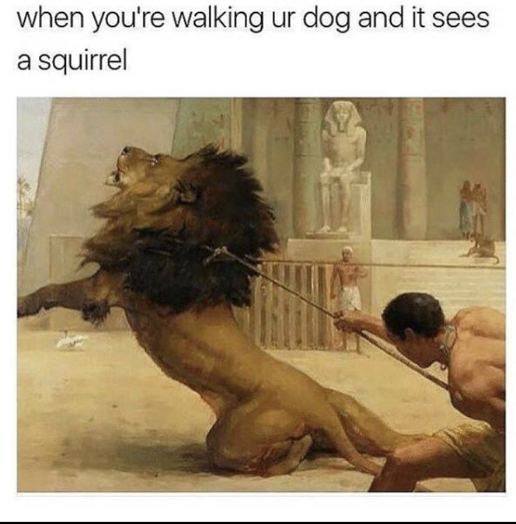 funky meme - Text - when you're walking ur dog and it sees a squirrel