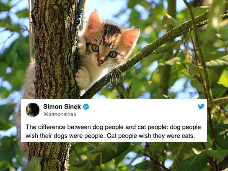 funny tweets cats dogs