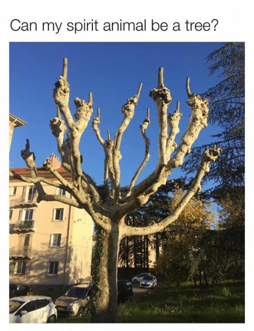 Funny spirit animal meme, spirit tree, middle fingers.