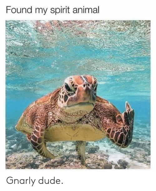 SPirit animal meme, sea turtle giving the finger.