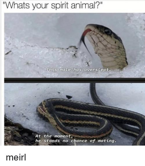 snake meme, spirit animal.