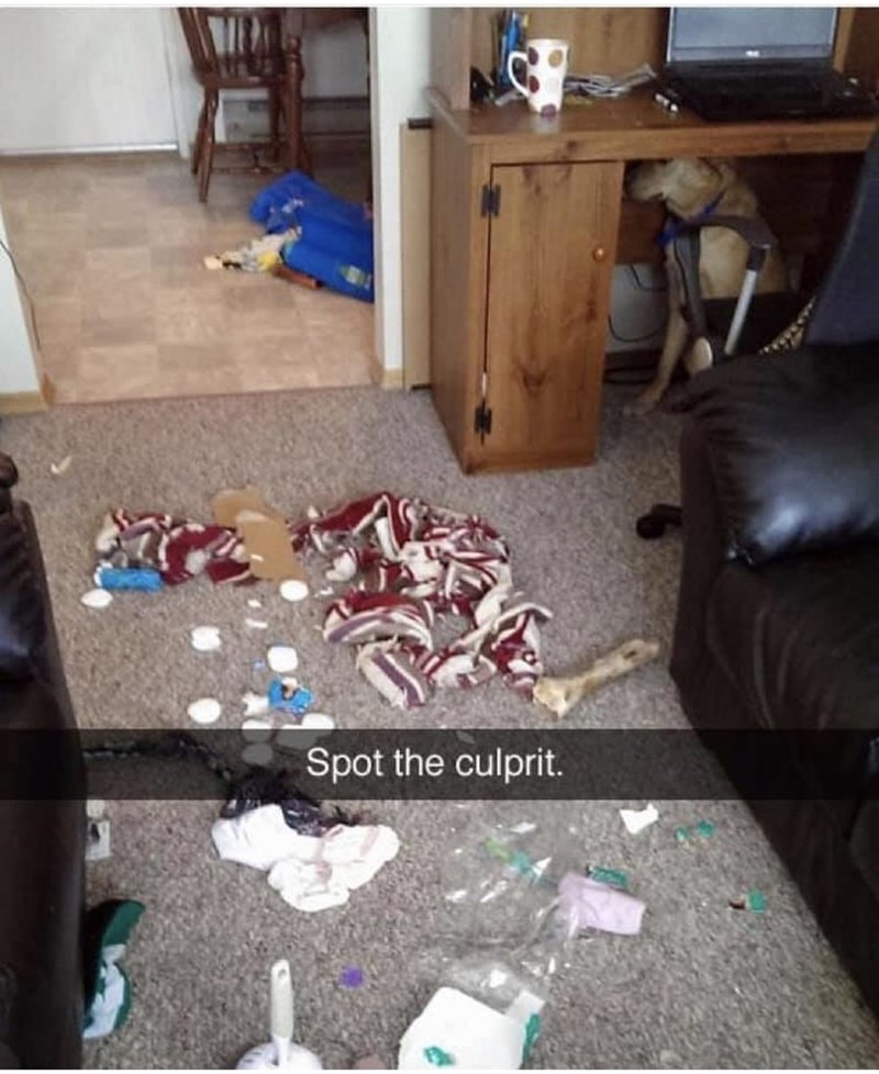 "Funny Snapchat photo of a dog who destroyed a living room and is now hiding under a desk with caption that reads, ""Spot the culprit"""
