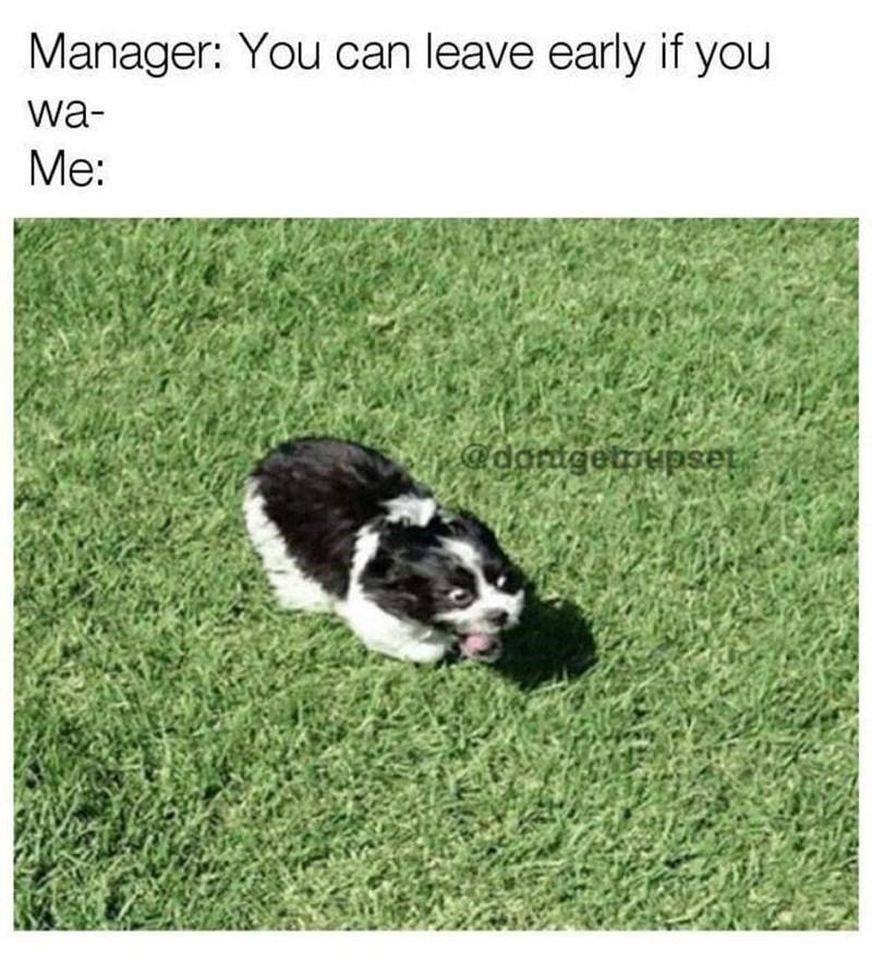 Cute and funny dog meme