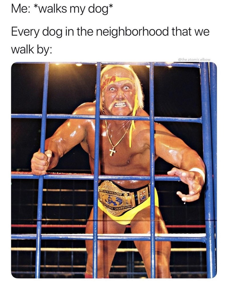 """Caption that reads, """"Me: *Walks my dog;* Every dog in the neighborhood that we walk by: ..."""" above a photo of Hulk Hogan looking aggressive"""