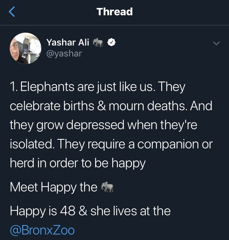 Text - Thread Yashar Ali @yashar 1. Elephants are just like us. They celebrate births & mourn deaths. And they grow depressed when they're isolated. They require a companion or herd in order to be happy Мeet Hаppy the Happy is 48 & she lives at the @BronxZoo