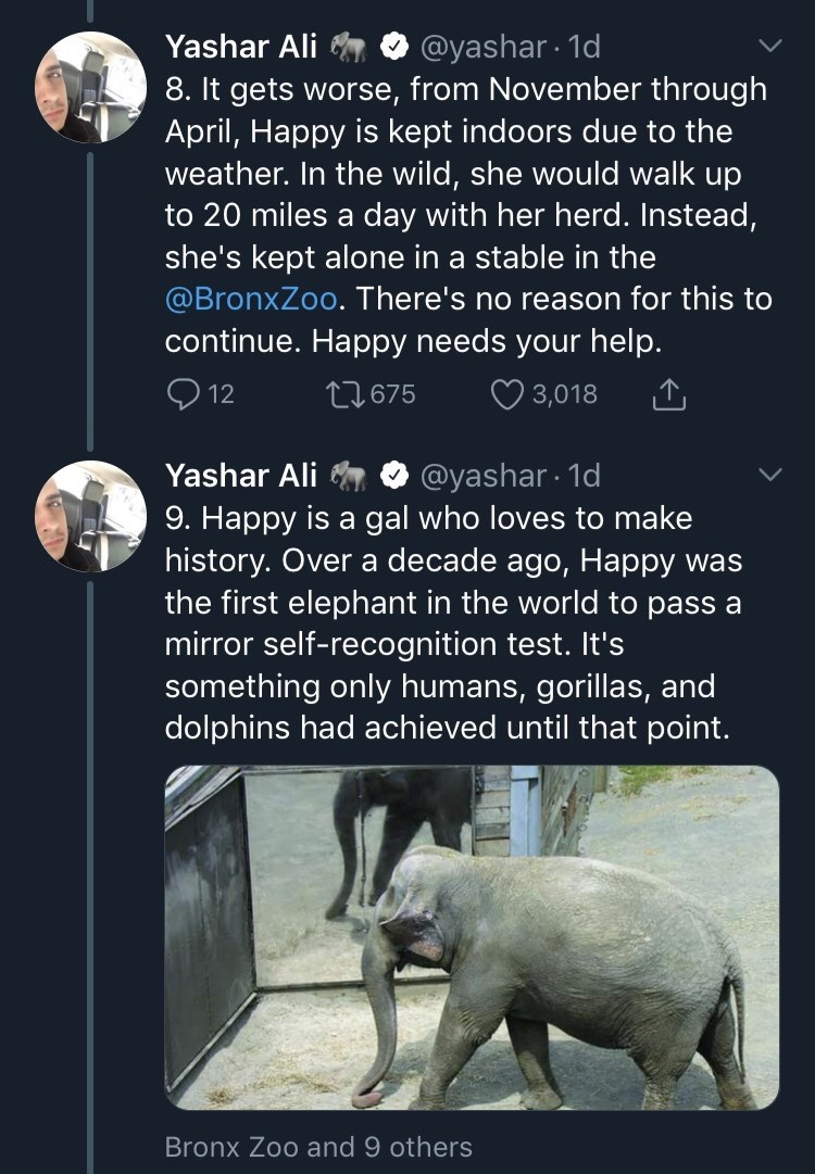 Text - @yashar 1d 8. It gets worse, from November through April, Happy is kept indoors due to the weather. In the wild, she would walk up to 20 miles a day with her herd. Instead, she's kept alone in a stable in the @BronxZoo. There's no reason for this to continue. Happy needs your help. Yashar Ali t675 12 3,018 @yashar 1d 9. Happy is a gal who loves to make history. Over a decade ago, Happy was the first elephant in the world to pass a mirror self-recognition test. It's something only humans,