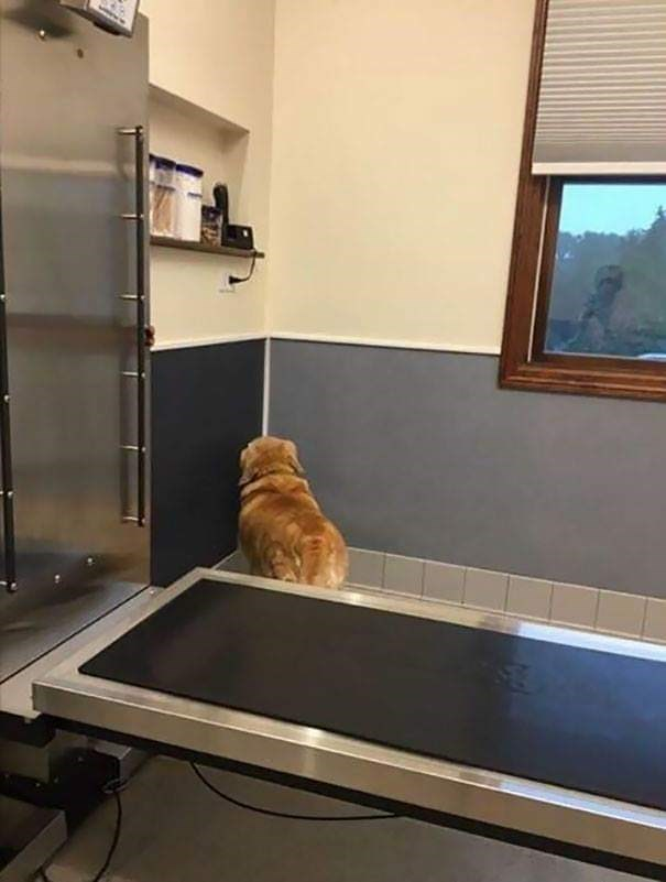 Funny and cute photo of a dog who realized they had to go to the vet