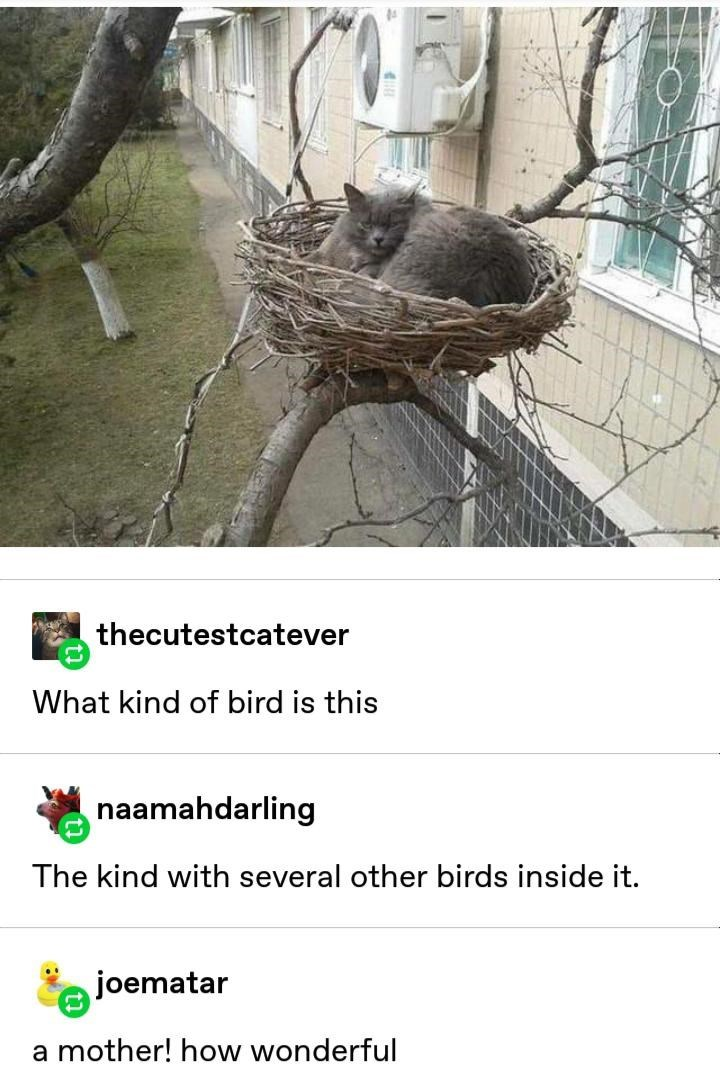 Funny Tumblr photo of a cat sitting in a bird's nest