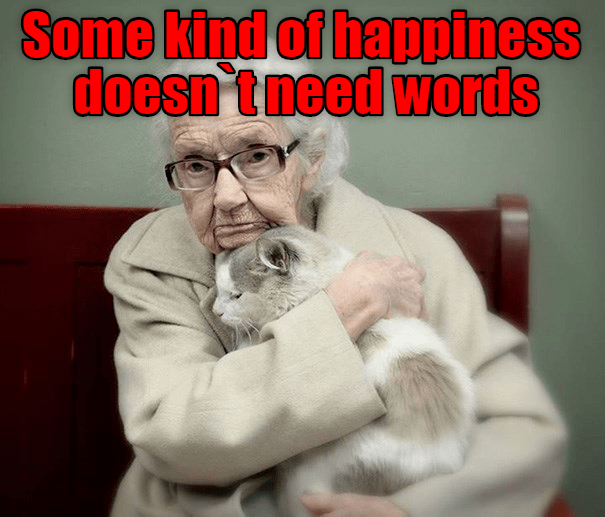 cat meme - Photo caption - Some kind of happiness doesn 't need words