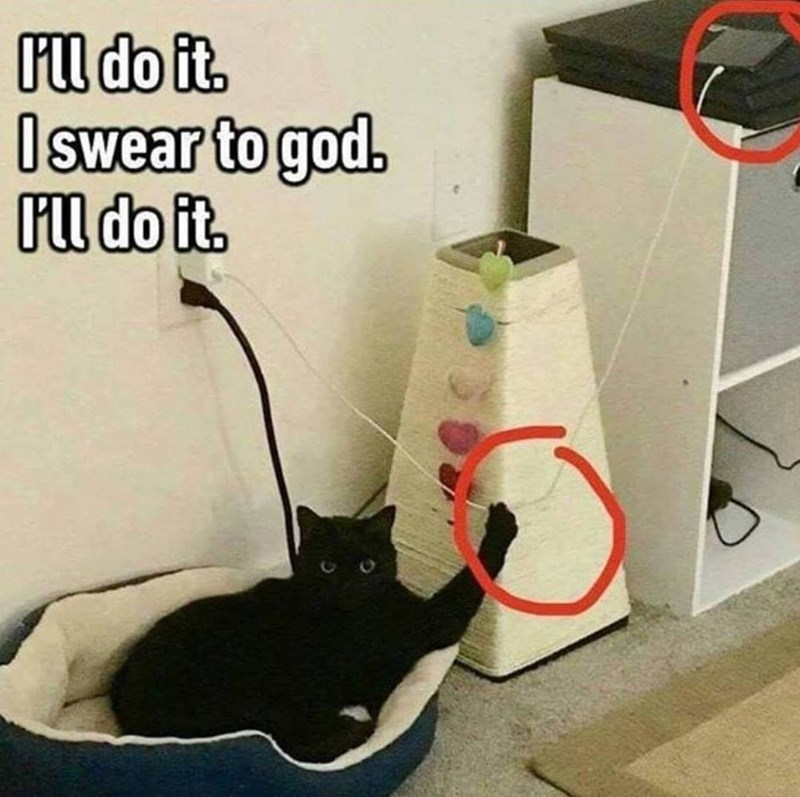 black cat holding onto a charging cable as if its threatening to make the phone fall