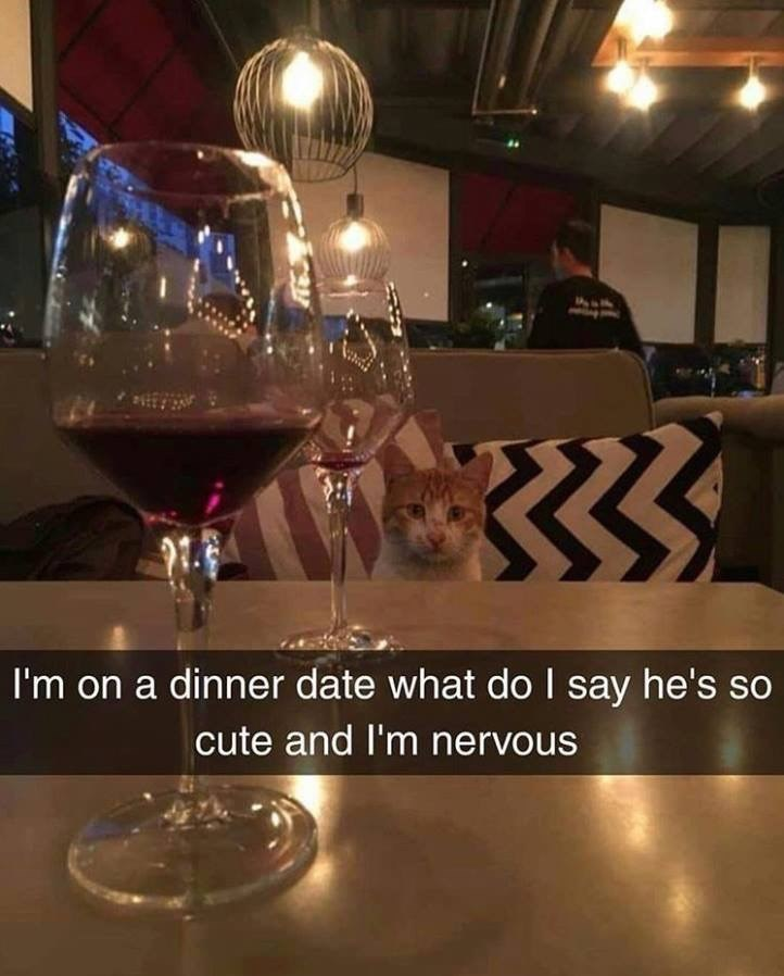 snapchat of a cat at a dinner table