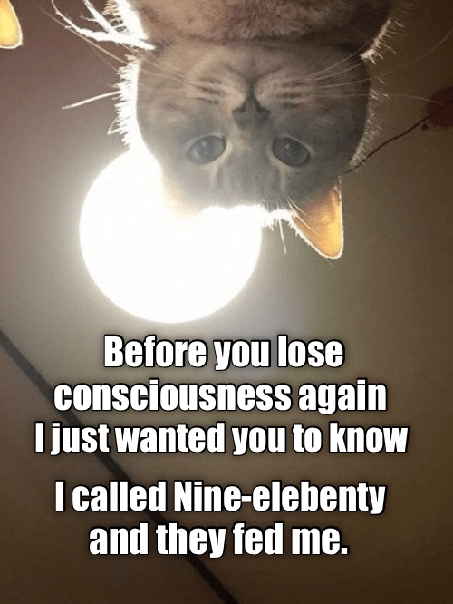 cat meme - Yoda - Before you lose consciousness again I just wanted you to know I called Nine-elebenty and they fed me.