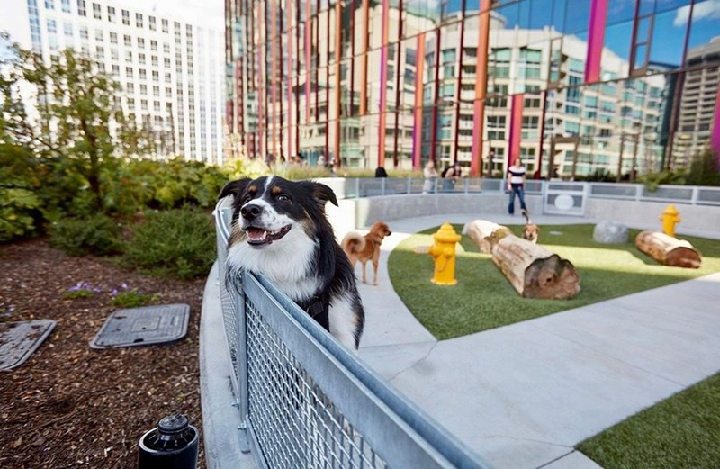 Pet dog at work in amazon Seattle